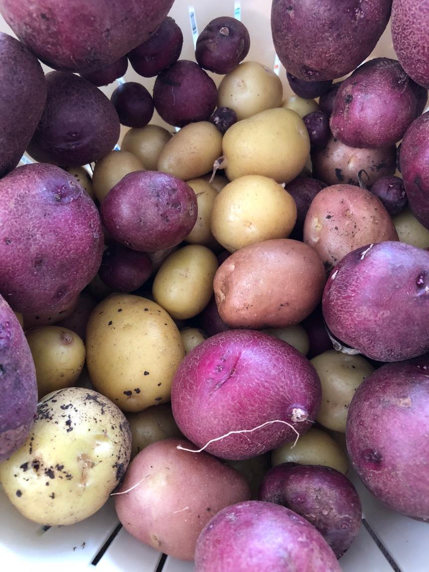Potato- Potahtoe