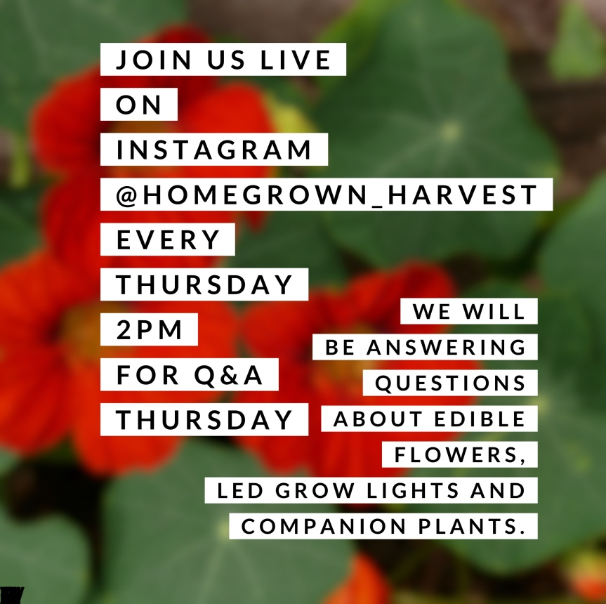 Homegrown Harvest Live! Q&A Thursday