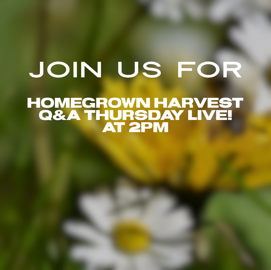 Homegrown Harvest Q&A Thursday Live!