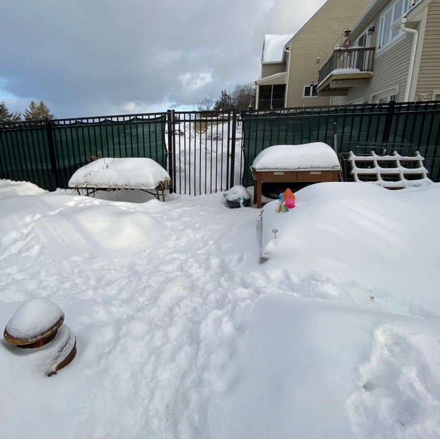 winter Garden 2020